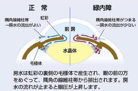 024_ryokunai02.jpg