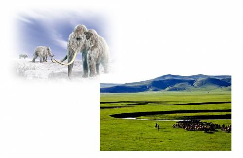 最終氷河期の2万年くらいになると、蒙古高原に住む人々の中にアポクリン腺が退化する人々が現れてきました