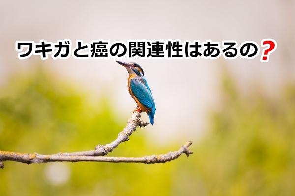 akane-blog_gan001.jpg