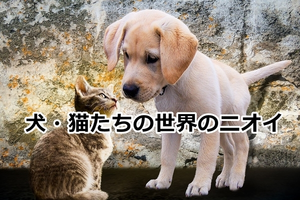 akane-blog_sjg002.jpg