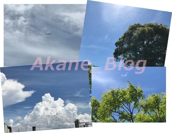 akane-cleaneo_hakata010.jpg
