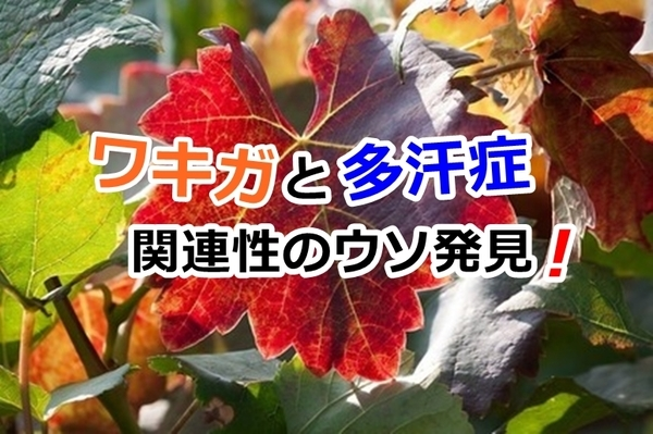 akane-gimon_llo001.jpg