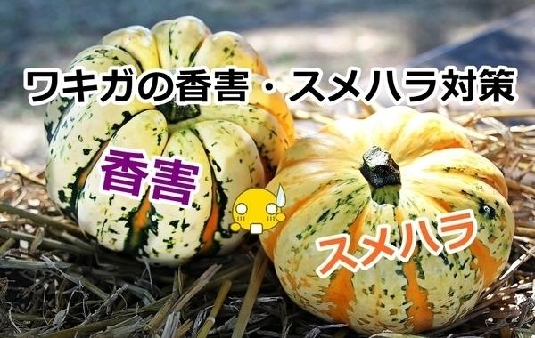 akane-kogai_s001.jpg