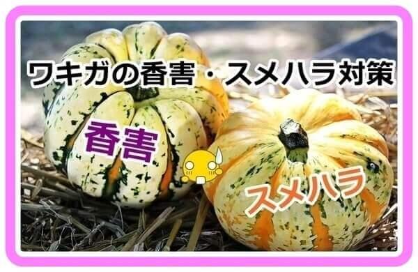 akane-kogai_svvd001.jpg