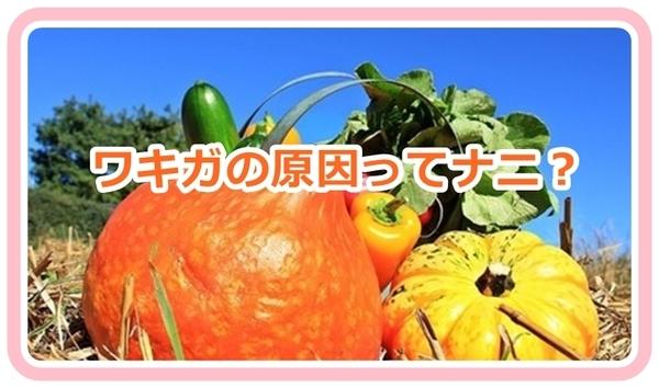 akane-wakiga_aki9867.jpg