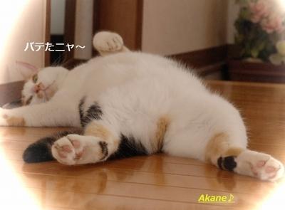 akane_neko001.jpg
