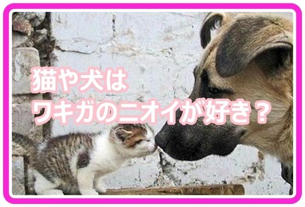 inuneko_vv18001.jpg