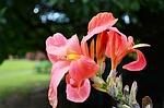 pink-flower-0201.jpg