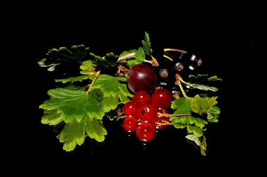 red-currant-0011.jpg