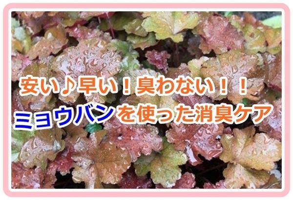 taeko-wakiga_vvk001.jpg