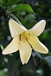 white-flower-w0010.jpg